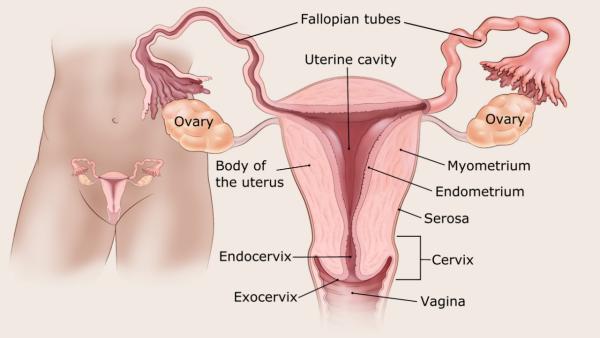Endometrium rák - Változókor: ez a rák a legveszélyesebb
